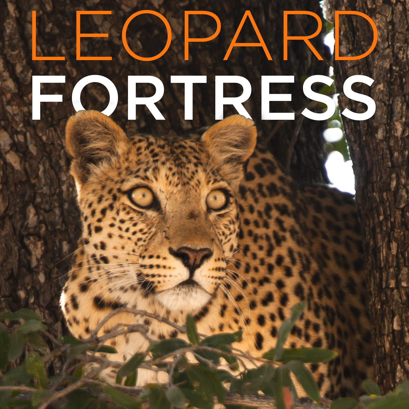 Leopard Fortress (HD)