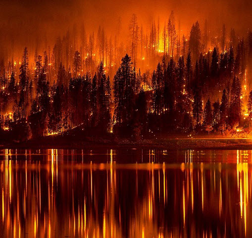 Image result for d&d fireball forest