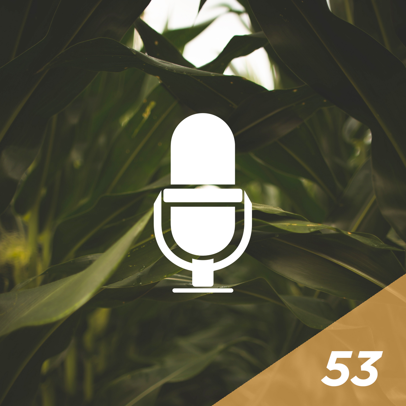 #53 - Father and Son Chat: The Evolution of Ag