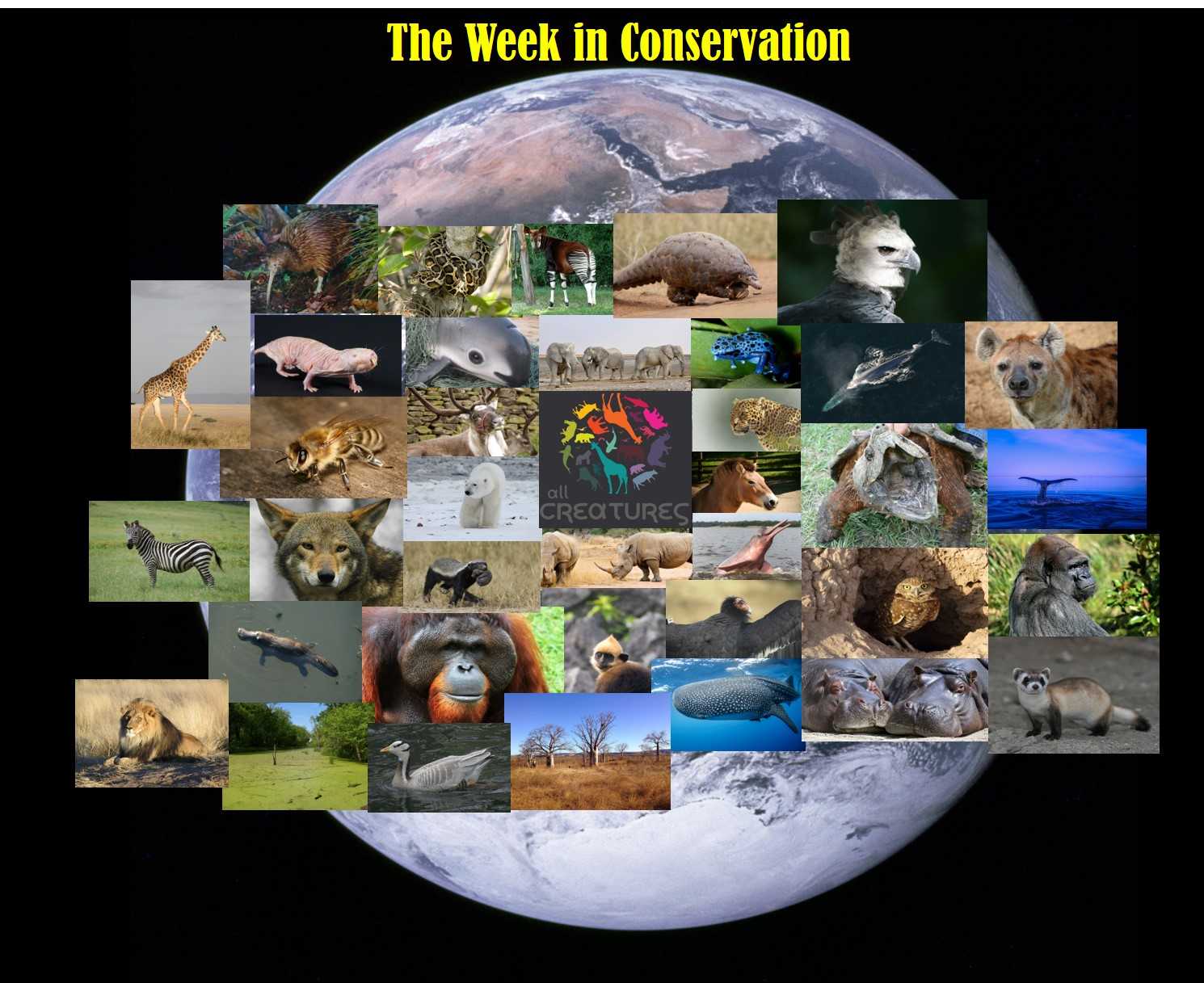 This Week in Conservation for July 13, 2018
