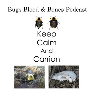 The Bugs Blood and Bones Podcast