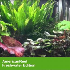 AmericanReef Freshwater