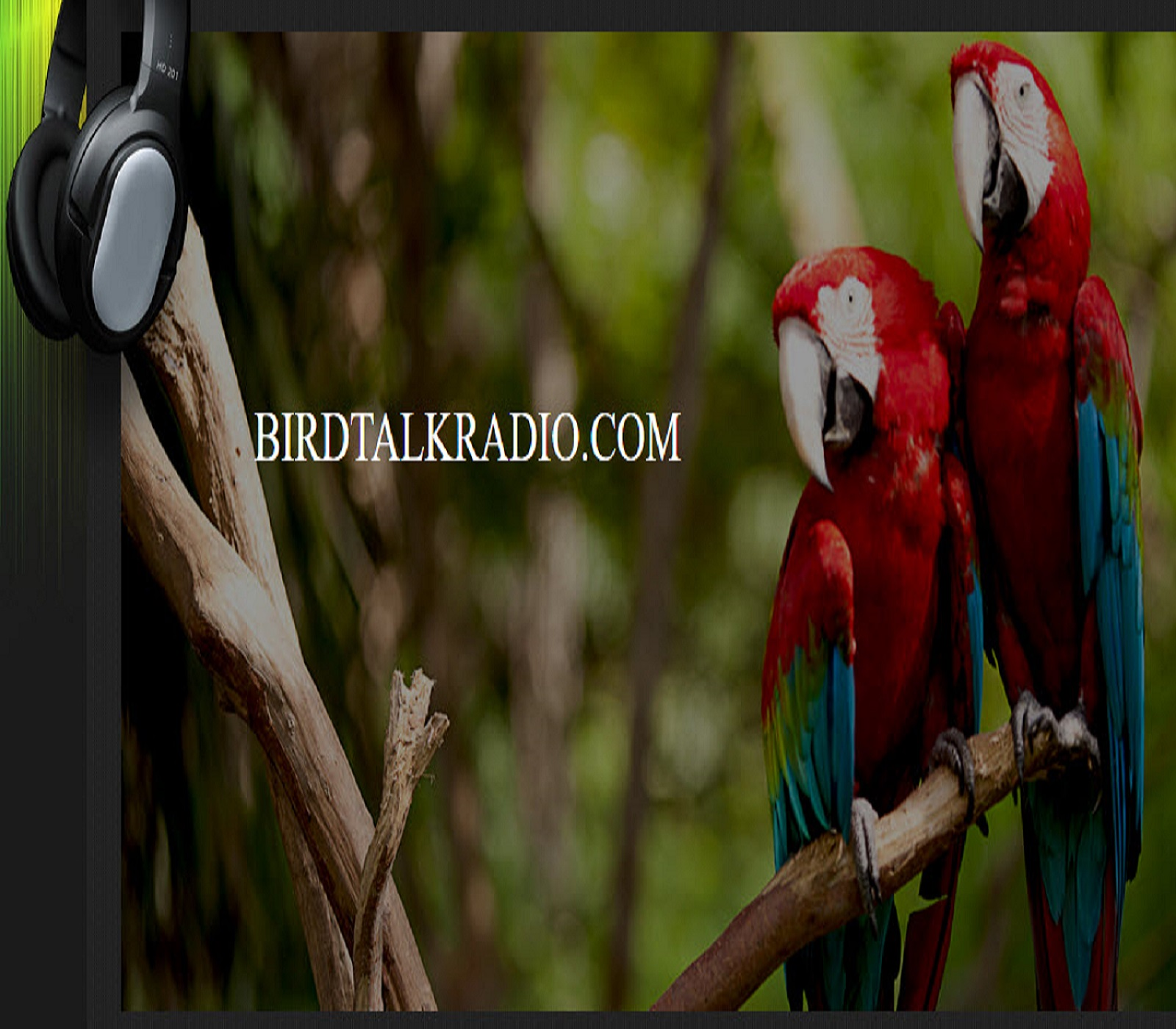 Bird Talk Radio